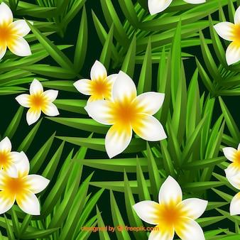 Leuke achtergrond met jasmijn bloemen