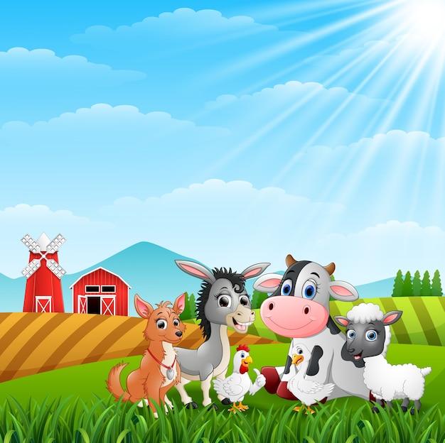 Leuke boerderijdieren op de heuvels