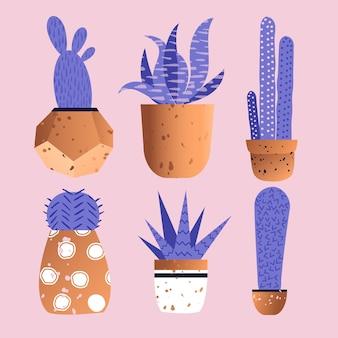 Leuke cactuscollectie