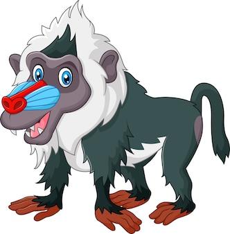 Leuke die baviaan op witte bacjground wordt geïsoleerd