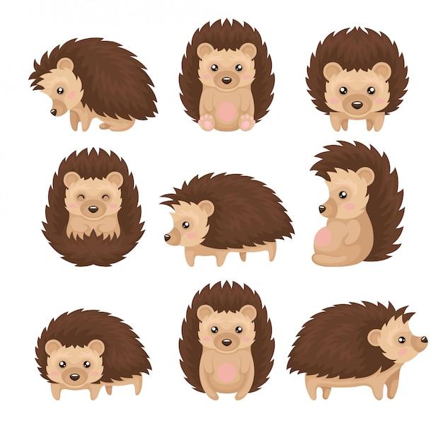 Leuke egel in verschillende poses set, stekelig dierlijk stripfiguur met grappige gezicht illustratie op een witte achtergrond