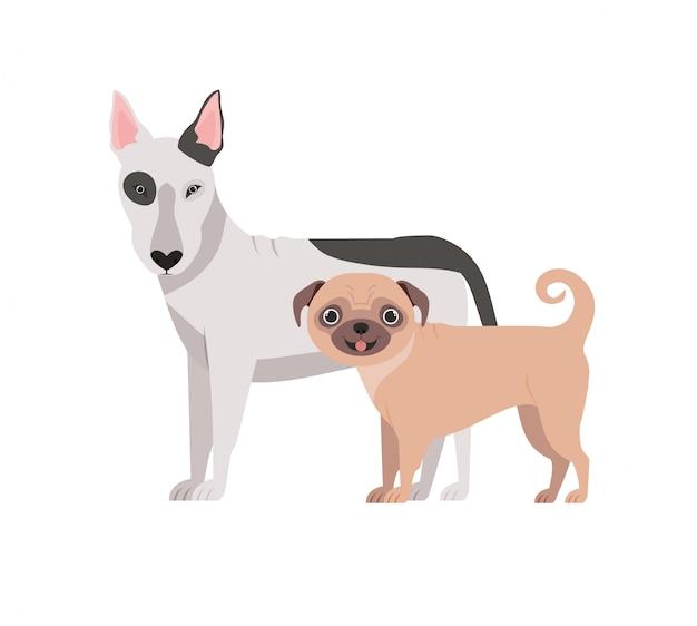 Leuke en schattige honden op wit