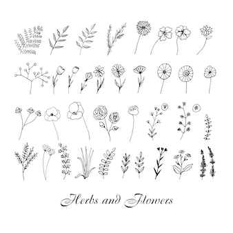 Leuke handgetekende set grafische bloemen- en kruidenelementen doodle illustratie voor bruiloft ontwerp