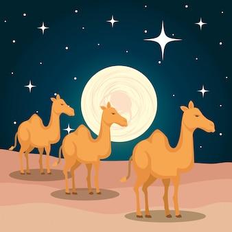 Leuke kamelen in woestijnscène