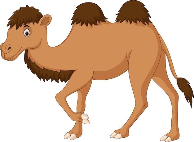 Leuke kamelenbeeldverhaal dat op witte achtergrond wordt geïsoleerd