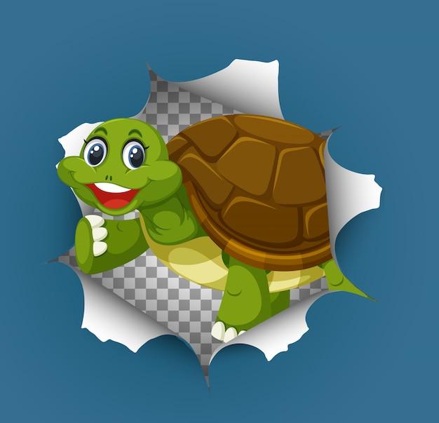 Leuke schildpad die uit gebarsten muur komt