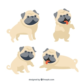 Leuke verscheidenheid aan mooie pugs