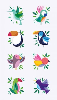 Leuke vogels veer gebladerte natuur fauna flora ontwerp