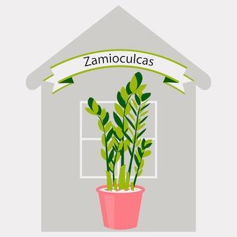 Leuke zamiokulkas dollar tree in een vaas huisbloem in een pot voor kamerdecoratie