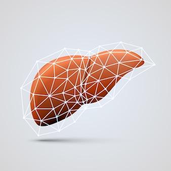 Lever teken medisch object kunst. vectorillustratie