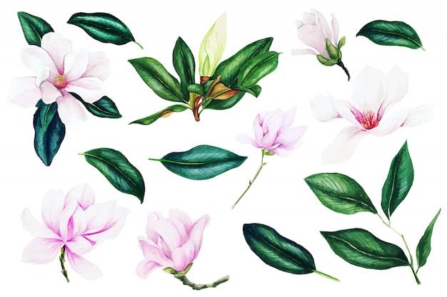 Licht roze magnolia bloemen en bladeren, aquarel collectie