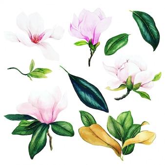 Licht roze magnolia bloemen en bladeren, aquarel set