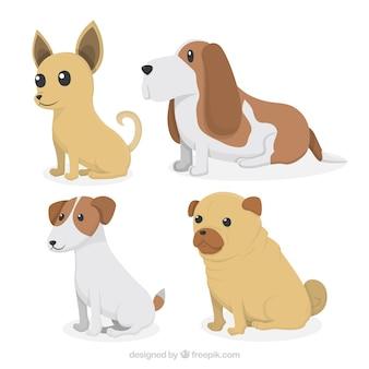 Lieve honden pakken