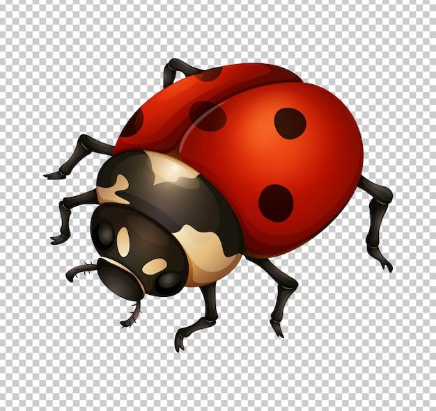 Lieveheersbeestje in fijne details