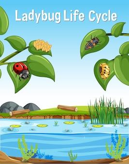 Lieveheersbeestje life cycle-lettertype in moerasscène