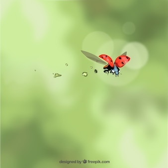 Lieveheersbeestje vliegen