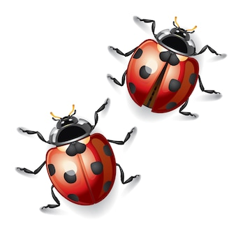 Lieveheersbeestjes illustratie.