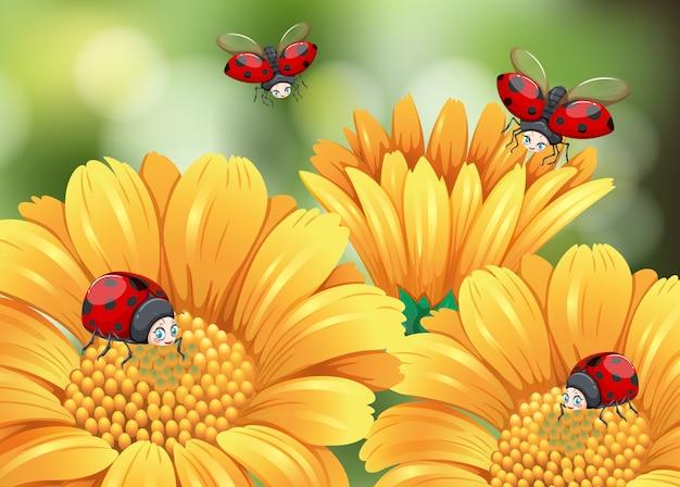 Lieveheersbeestjes vliegen in de tuin