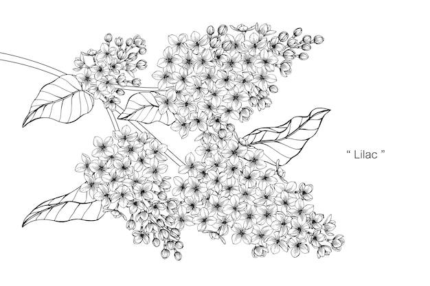 Lila bloem tekening illustratie.