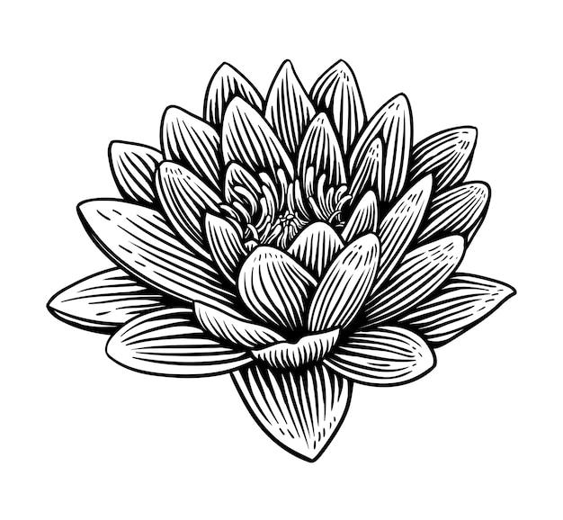 Lily lotus water bloem illustratie hand getrokken