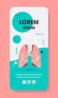 Longen structuur menselijk inwendig orgaan anatomie biologie gezondheidszorg medisch concept ademhalingssysteem smartphonescherm mobiele app verticale kopie ruimte plat