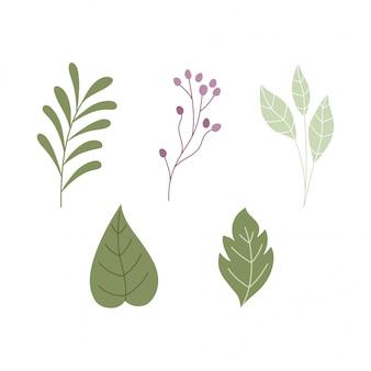 Loofbladeren tak botanische kruiden natuur iconen