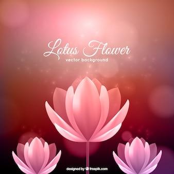 Lotusbloem achtergrond