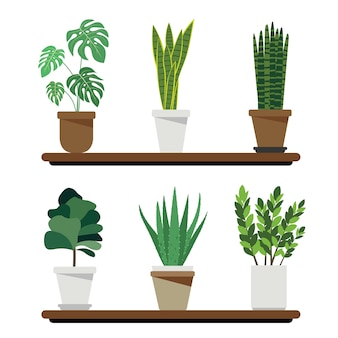 Luchtfilterende en zuiverende planten waaronder monstera, snake plant, sansevieria cylindrica, fiddle fig, aloe vera en zanzibar gem luchtbevochtiger kamerplant voor zorgconcept.