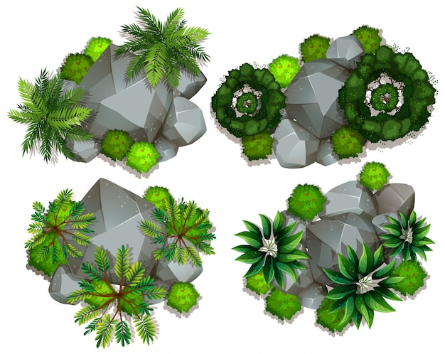 Luchtfoto van planten en rotsen