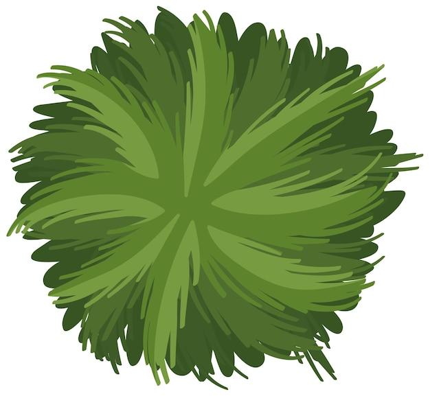 Luchtmening van een groene struik die op witte achtergrond wordt geïsoleerd