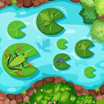 Luchtscène met kikkers en lotusbladeren in de vijver