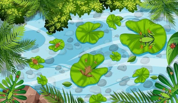 Luchtscène met kikkers en lotusbloembladeren in de vijver