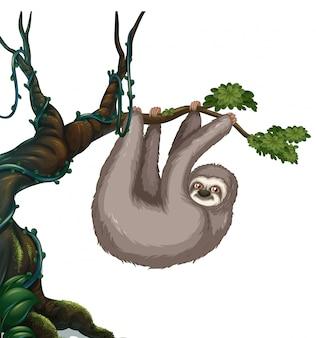 Luiaard hangt aan de boom