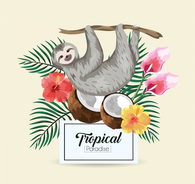 Luiaard met tropische kokosnoot en etiket met bladeren