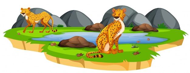 Luipaard in de natuur