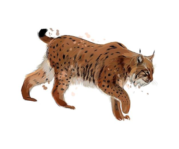Lynx uit een scheutje aquarel, gekleurde tekening, realistisch.