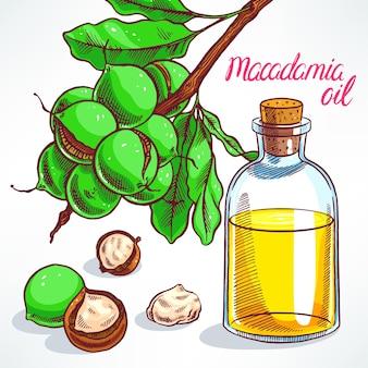 Macadamia-boomtak met fruit en fles macadamia-olie. handgetekende illustratie