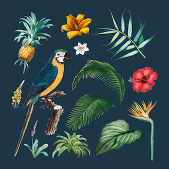Macaw gebladerte illustratie