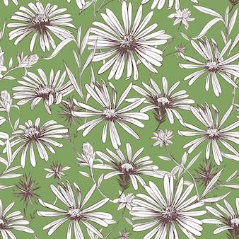 Madeliefje. naadloze patroon. vector schets illustratie. stof ontwerp.