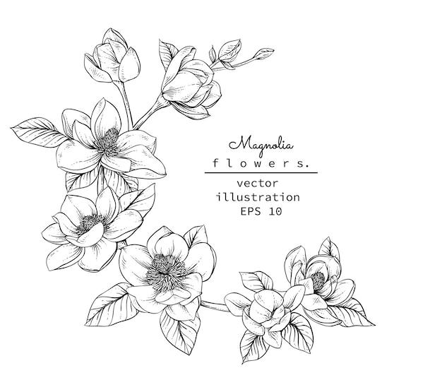Magnolia bloemtekeningen.