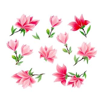 Magnolia handgetekende illustraties instellen