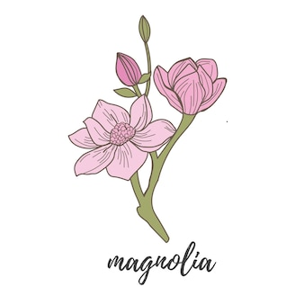 Magnolia op witte achtergrond