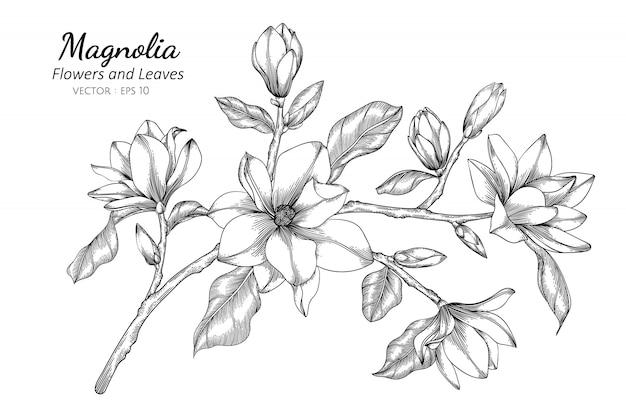 Magnoliabloem en bladtekeningillustratie met lijnkunst op witte achtergronden.