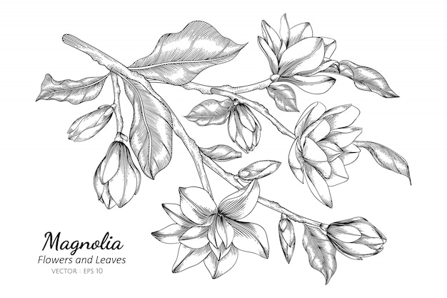 Magnoliabloem en bladtekeningillustratie