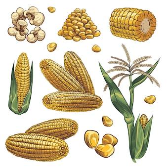 Maïs in de hand getekende stijl