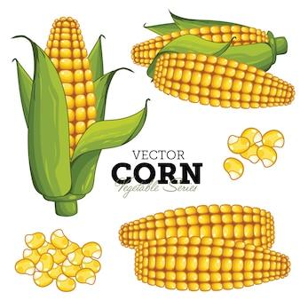 Maïs op witte achtergrond wordt geïsoleerd die