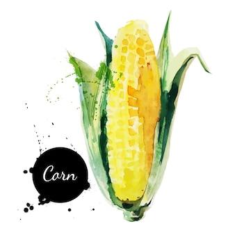 Maïskolf met blad. hand getekend aquarel op witte achtergrond. vector illustratie