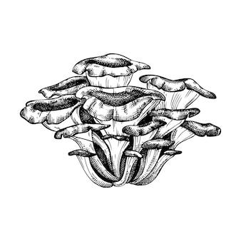 Maitake paddenstoel handgetekende illustratie.