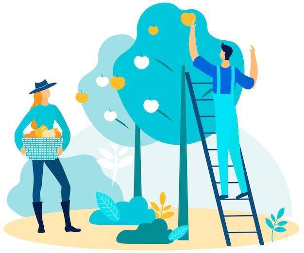 Man op ladder plukken appel en zet in vrouw mand
