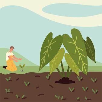 Man plant veld
